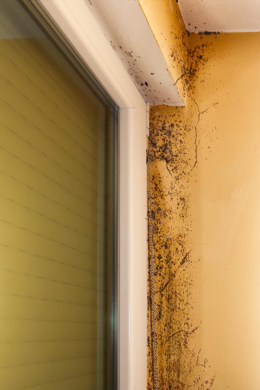 Mold On Walls Outside