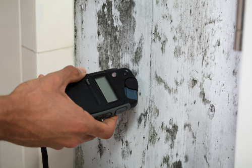 person measuring moisture level on moldy wall