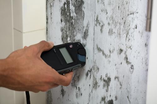 moisture meter held against mold on wall