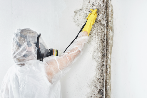 contractor wearing protective gear spraying mold